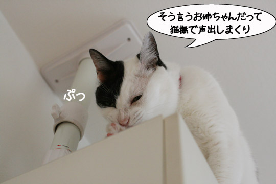 猫の振り見て12