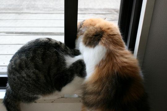 窓際猫団子1