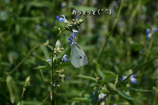 20080713-12.jpg