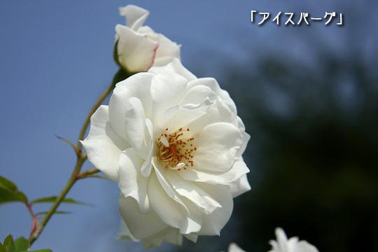 20080713-14.jpg