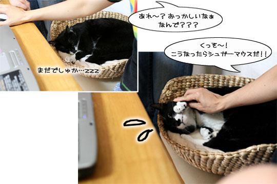 猫の手も借りたい7