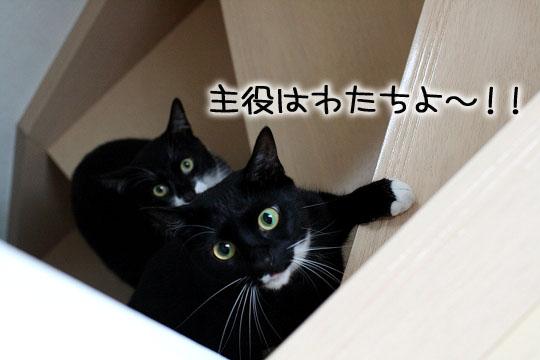 主役のソルちゃん11