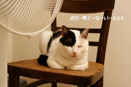 福ちゃんおやすみ1