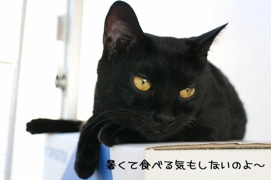 ウタさん夏バテ?5