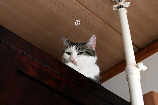 ヒトのことを笑う猫11