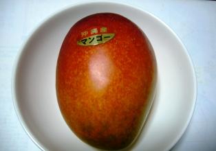 manngo-1.jpg