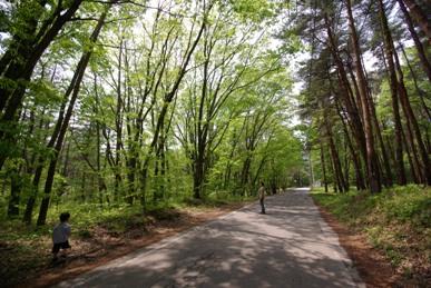 小淵沢の森