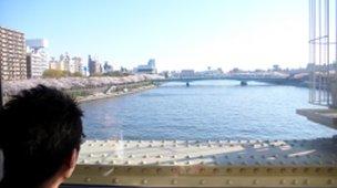 隅田川のサクラ