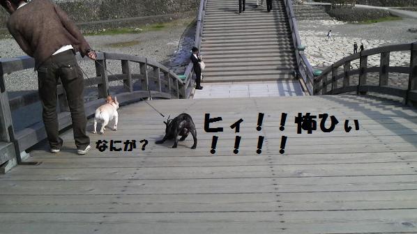 2008041815050001.jpg
