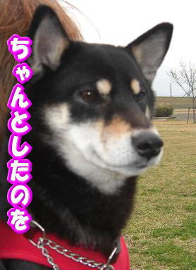 200411-8.jpg