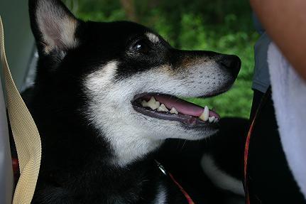200803-1.jpg
