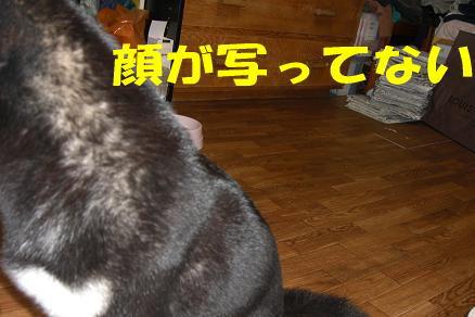 200807-2.jpg