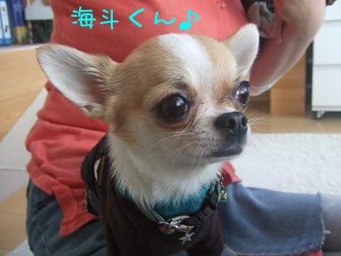海斗くんのコピー