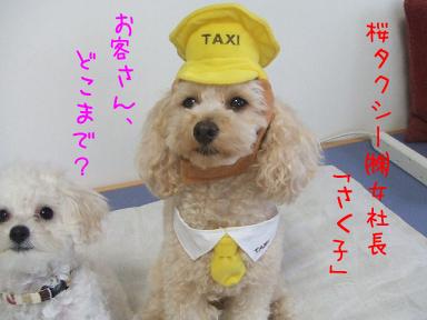 さくらタクシーのコピー