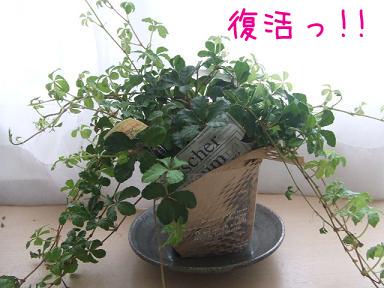 観葉植物のコピー