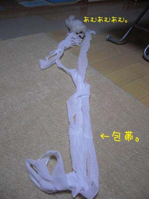 包帯のコピー