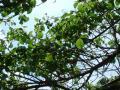 berry112.jpg