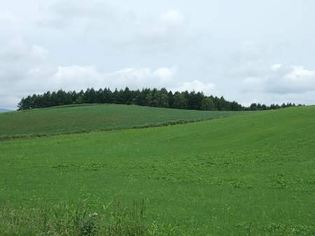 フェニックス牧場の丘