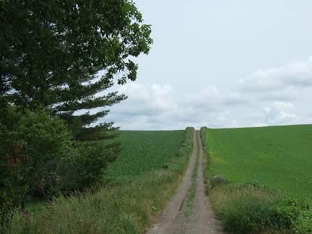 丘の通学路