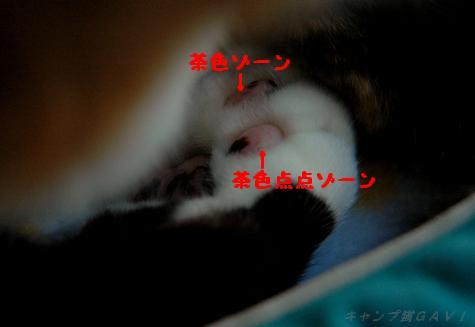 bDSC_4682.jpg