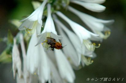 bDSC_5521.jpg