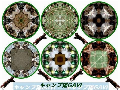 bgavi_m21.jpg