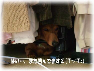 10_20080520235051.jpg