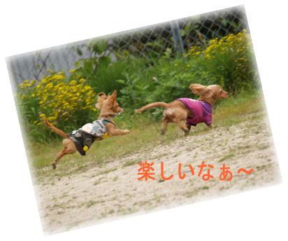11_20080513172527.jpg