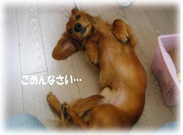 14_20080520235118.jpg