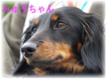 15_20080513172547.jpg