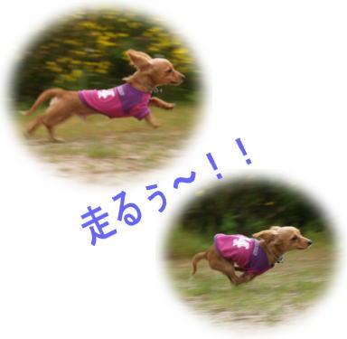 22_20080513172658.jpg