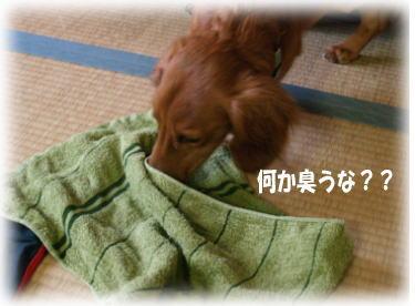 2_20080520234953.jpg