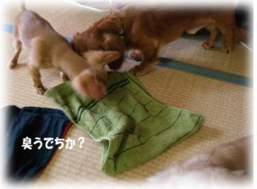 3_20080520234957.jpg