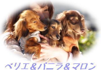 40_20080513172913.jpg