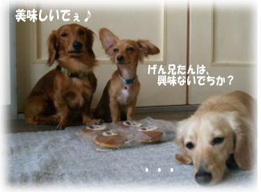 5_20080523020306.jpg