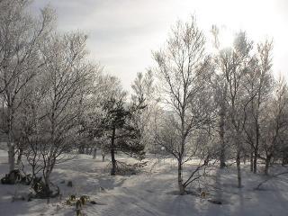 早朝の樹氷