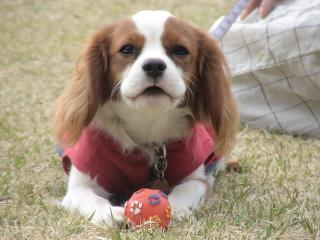 ボールとフリスビーが大好きです