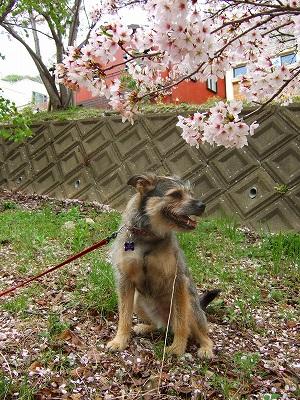 2008_0413kukku0339.jpg