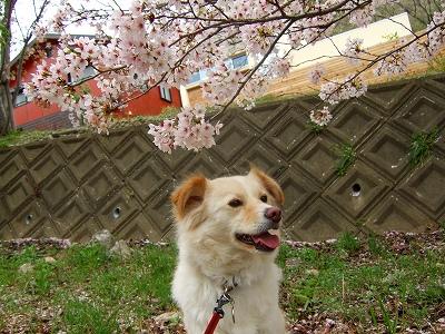 2008_0413kukku0343.jpg