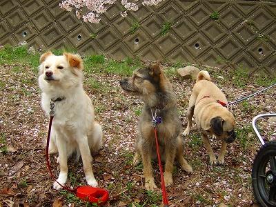 2008_0413kukku0345.jpg