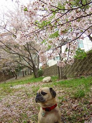 2008_0413kukku0348.jpg