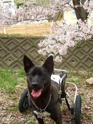 2008_0413kukku0363.jpg