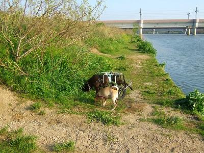 2008_0420kukku0026.jpg