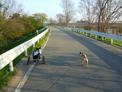 2008_0420kukku0030.jpg