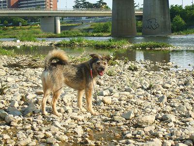 2008_0521kukku0007.jpg