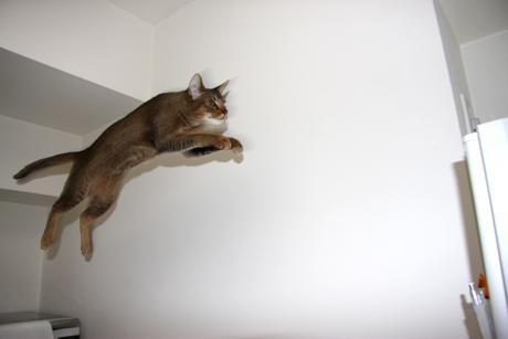 ネオ、飛ぶ!
