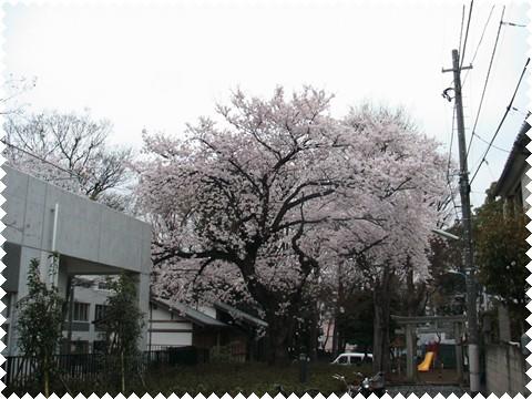 _代々木公園&桜 019