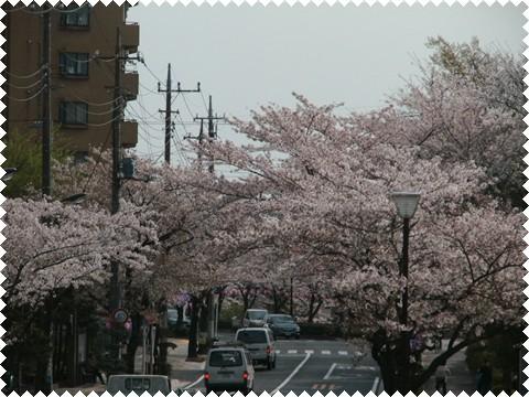 _桜&リボン 005