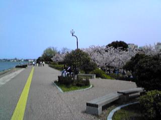 湊山公園さくら