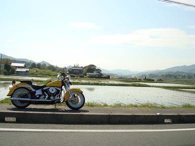 コピー ~ DSC00366